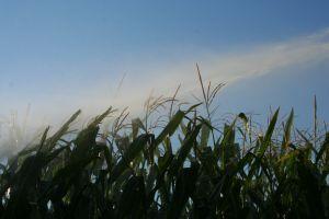 irrigation-834036-m