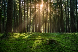 forest-sunrise-1425966-m